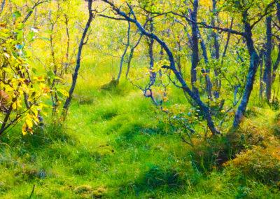 Wald 1 Kopie 2