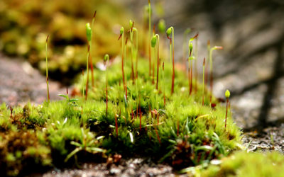 Swiss Arctic Thursday: plants, which are present in the Polar Regions
